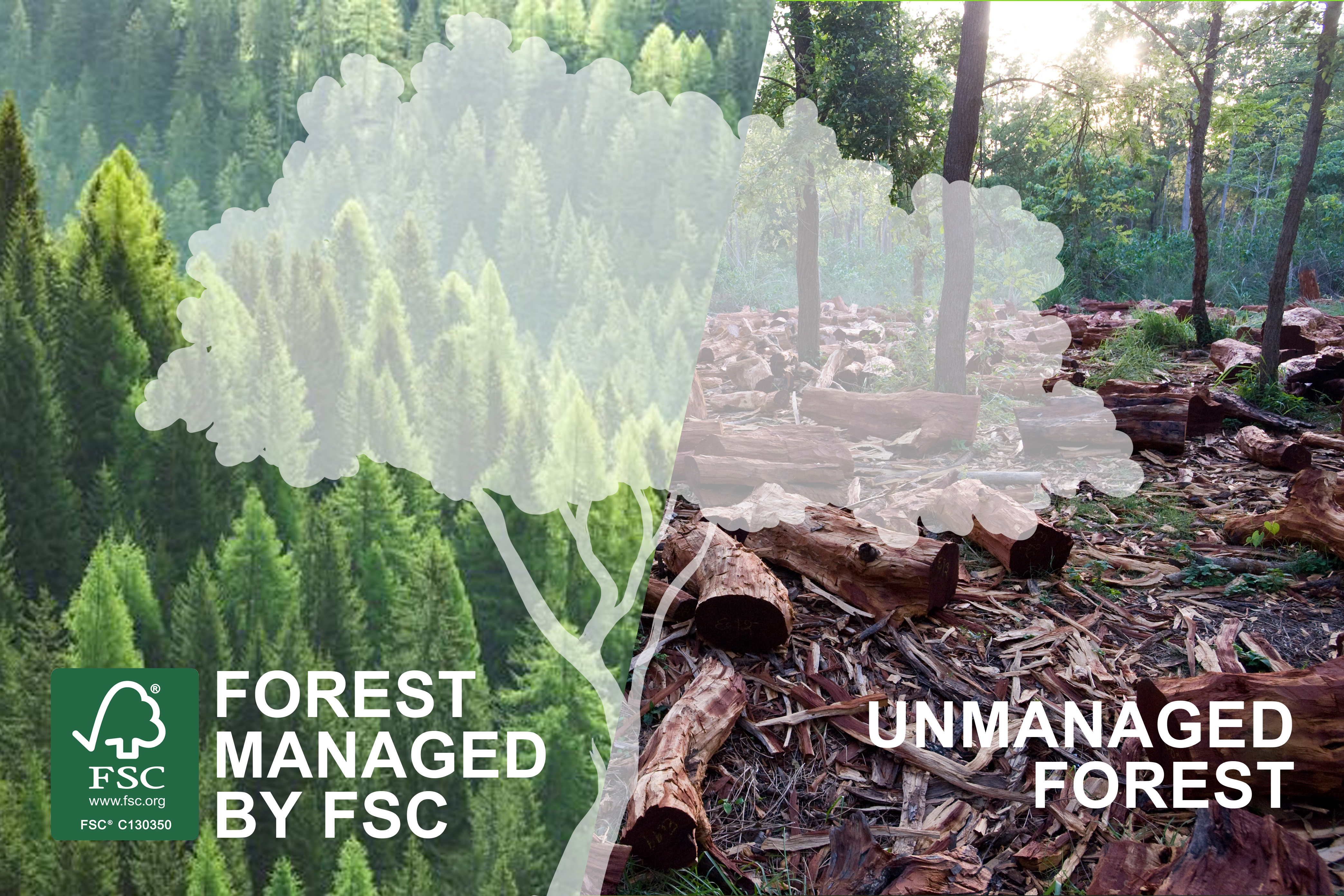 FSC Managed Forest vs Unmanaged Forest